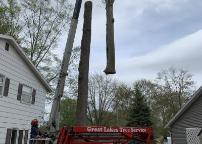 Using a crane to safely remove a tree