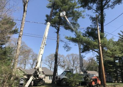 Safely removing a tree near power lines using a crane