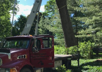 Cleanup after a tree removal in West Michigan