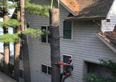 Safe tree removal near home