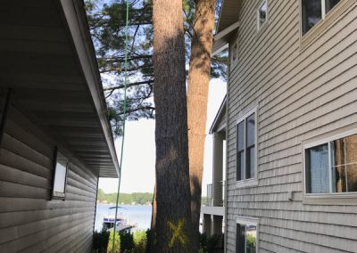 Removing a tree between two homes