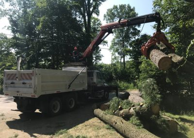 Cleanup after tree removal